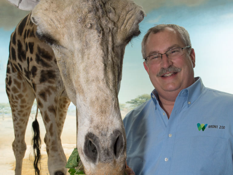 Jim Breheny with a giraffe
